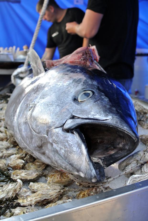 Tuňák.